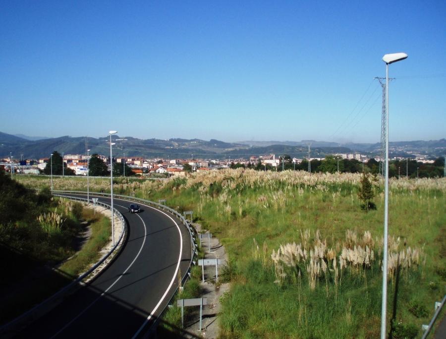 Plumeros en el enlace entre las autovías A-8 y A-67 en Sierrapando
