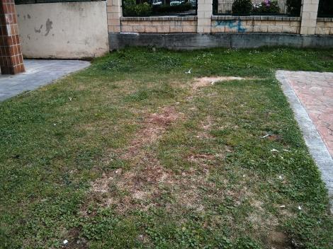 La asociación nos trasladó la petición de plantar más árboles en el barrio